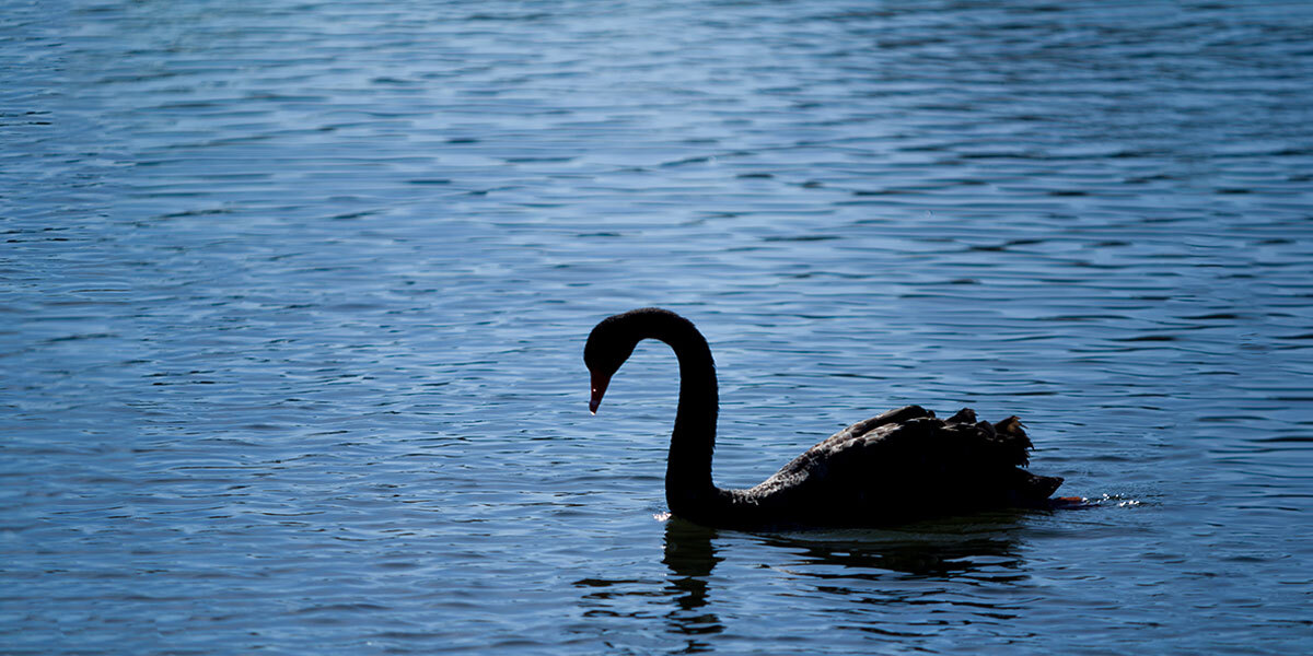 Fighting the Black Swan in Your Oil and Gas Career